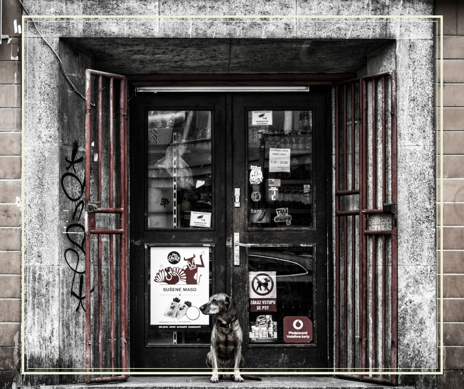 dog standing in a store's entryway
