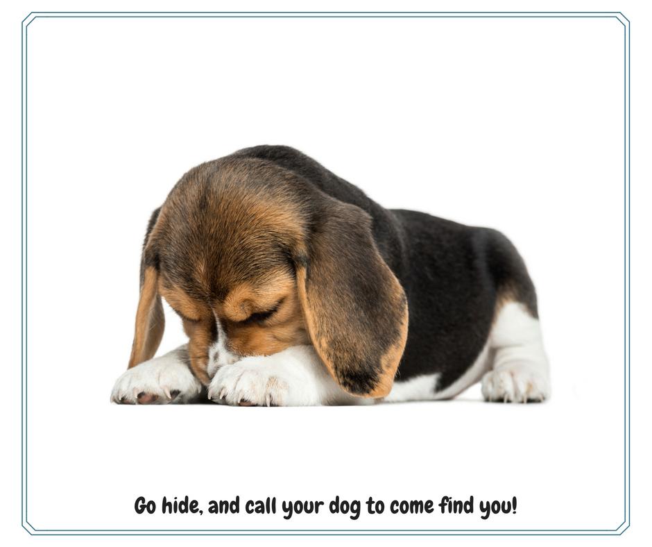 dog hide