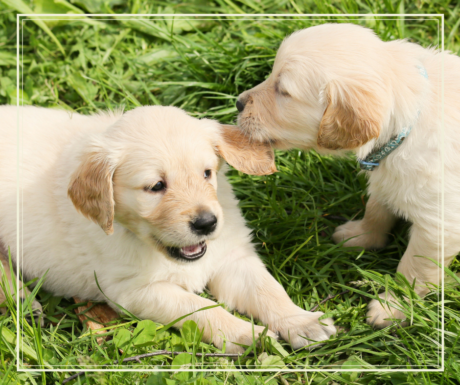 two puppies practicing puppy socialization skills